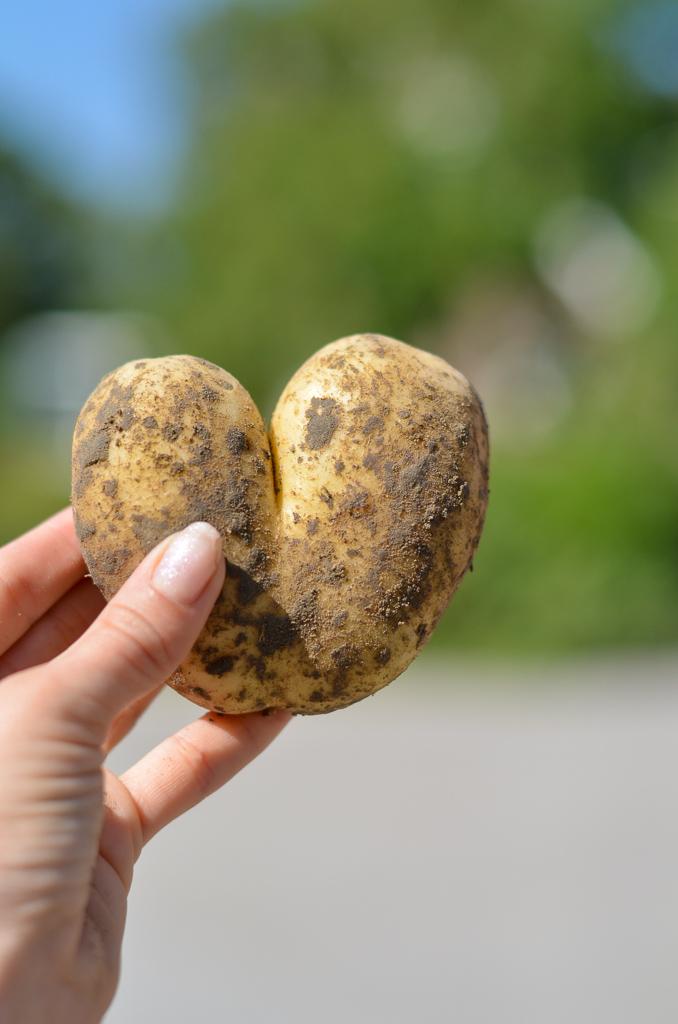 aardappel hartje