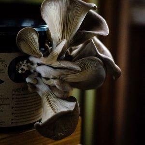 growkit fryslan fungies